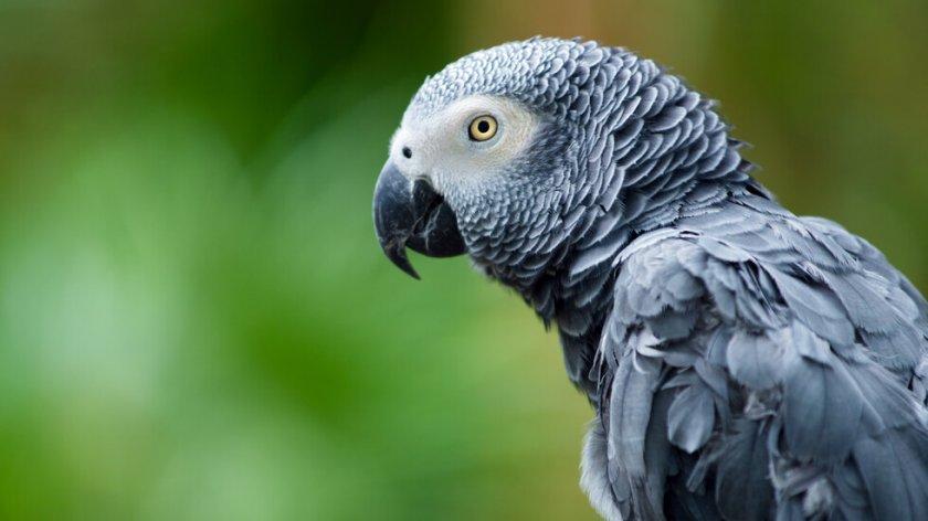 Лоши обноски: Зоопарк изолира папагали, псували посетителите