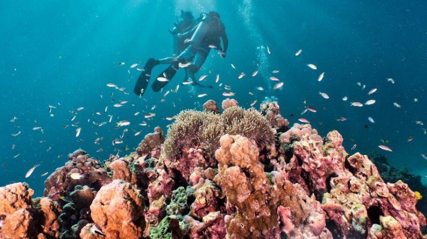 """Учени откриха коралов риф, по-висок от """"Емпайър Стейт Билдинг"""" (ВИДЕО)"""