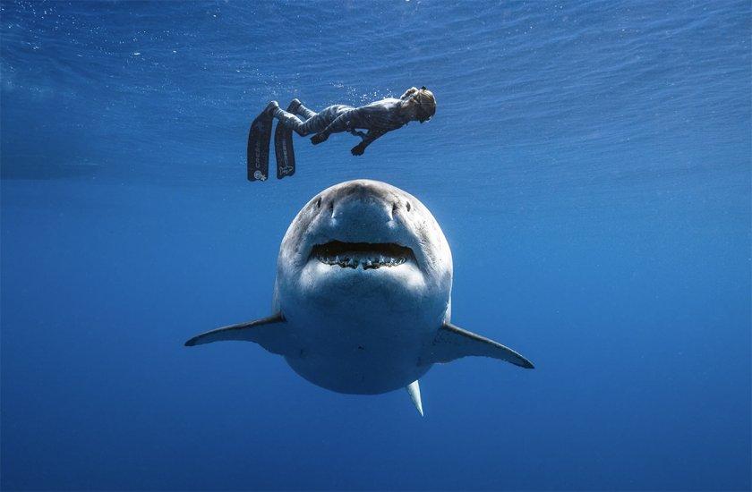 Акула изяде мъж в Австралия