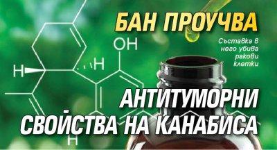 БАН проучва антитуморни свойства на канабиса