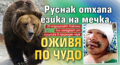 Руснак отхапа езика на мечка, оживя по чудо