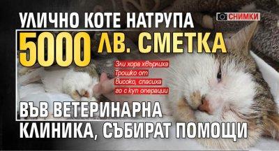 Улично коте натрупа 5000 лв. сметка във ветеринарна клиника, събират помощи (снимки)
