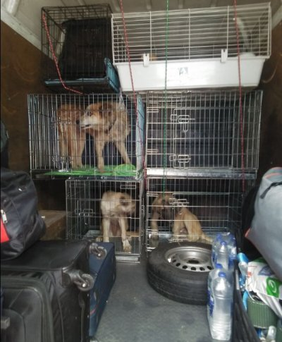 Скандал с приют с 200 кучета и 100 котки