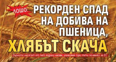 ЛОШО: Рекорден спад на добива на пшеница, хлябът скача