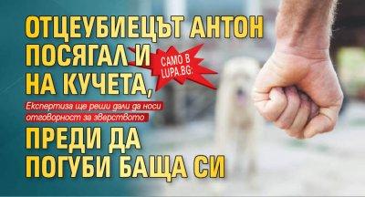 Само в lupa.bg: Отцеубиецът Антон посягал и на кучета, преди да погуби баща си