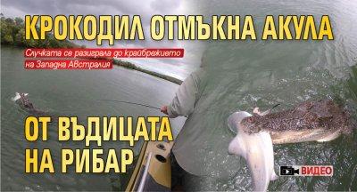 Крокодил отмъкна акула от въдицата на рибар (ВИДЕО)