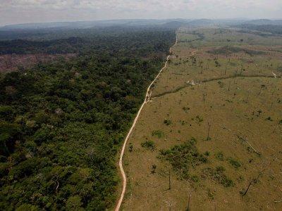 Две трети от тропическите гори по света са унищожени