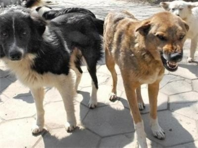 Прокуратурата погва бездомните кучета
