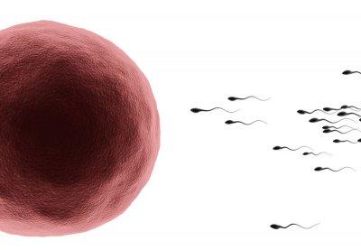 Яйцеклетката сама си избира сперматозоид