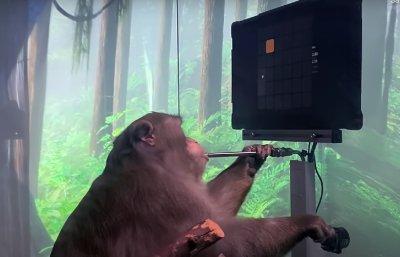 Илон Мъск чипира маймуна, нас кога? (ВИДЕО)