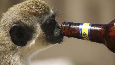 Лепнаха доживотна присъда на маймуна пияница