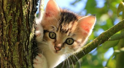 Дисциплина: Въвеждат вечерен час за котки