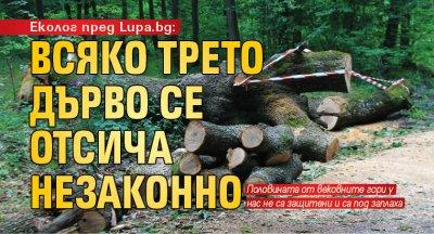 Еколог пред Lupa.bg: Всяко трето дърво се отсича незаконно