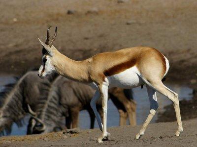 Мълния уби 350 степни антилопи