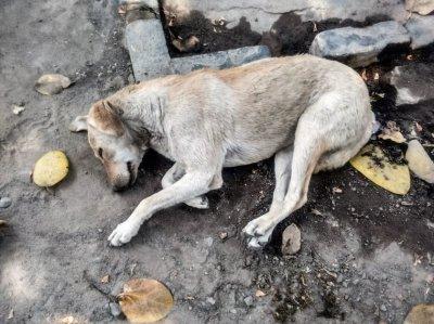 Застреляха куче в Тутракан