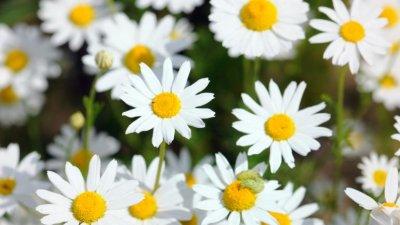 Кои билки привличат богатство?
