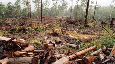 Близо 1000 незаконно отсечени дървета само за седмица