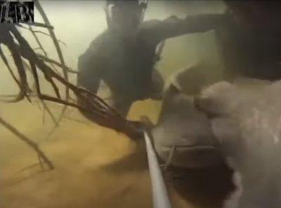 Водолаз преследва сомове по 100 кила (ВИДЕО)