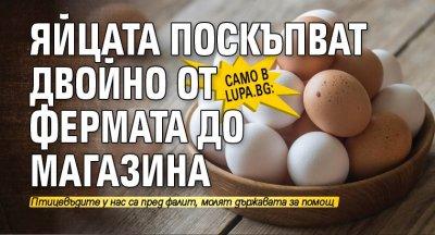 Само в Lupa.bg: Яйцата поскъпват двойно от фермата до магазина