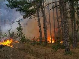 Страховит пожар изпепели стотици декари земя край Бучино