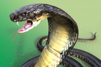 Змии следят радиацията във Фокушима