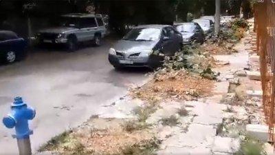 Погром: Строител отсече 11 липи в София