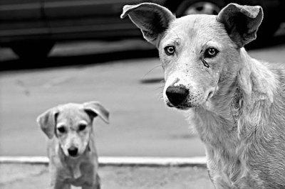 40 кучета захвърлени край пътя за Перелик