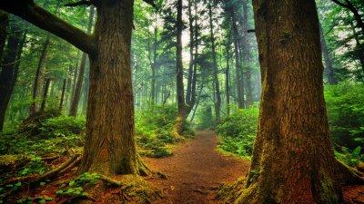 Трилион нови дървета срещу климатичните промени