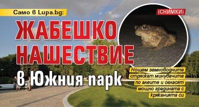 Само в Lupa.bg: Жабешко нашествие в Южния парк (СНИМКИ)
