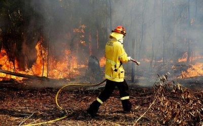 Пожарът до с. Гостун е овладян