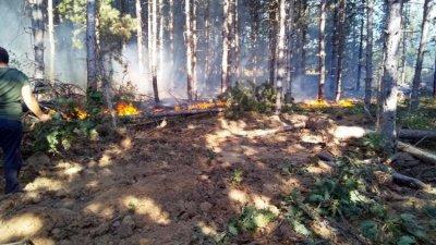 Мълния предизвика горски пожар край Павел баня