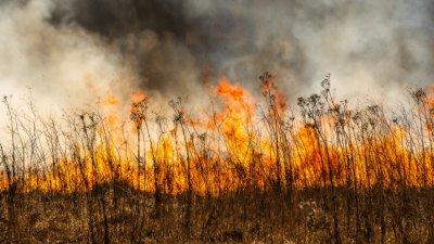 Локализираха пожарите край Пернишко и Кюстендилско, молят се да няма вятър