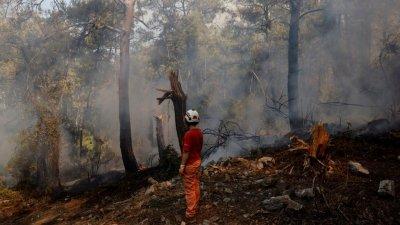 Пожар в Турция достигна ТЕЦ