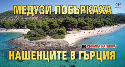 Медузи побъркаха нашенците в Гърция (СНИМКА НА ЗВЯРА)