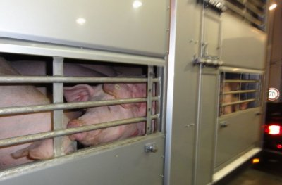 Евроделегация идва у нас да провери отношението към животните
