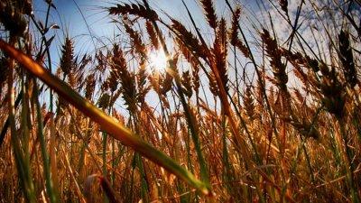 ООН: Вредите от субсидиите в селското стопанство далеч надхвърлят ползите