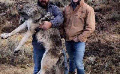 Гръцки вълци нападнаха Гоце Делчев