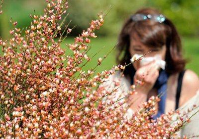 40% от хората страдат от алергии