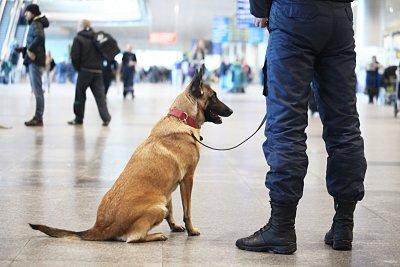Топ агенти: Полицейски кучета разкриха 150 престъпления