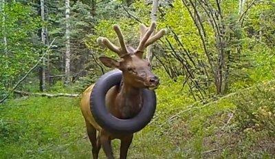 Елен ходи 2 г. с гума на врата