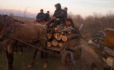 Роми на помощи крадат дърва