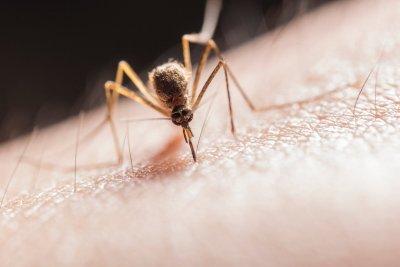 Нов ужас в Италия: Опасни комари нападнаха страната