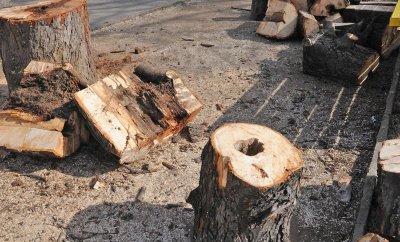 Нападнаха горски заради акт за незаконна сеч