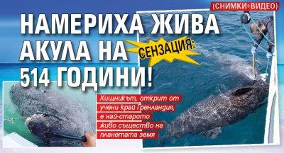 Сензация: Намериха жива акула на 514 години! (снимки+видео)