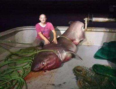 Рибари уловиха 5-метрова акула, тежка 1 тон