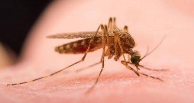 Дете получи инфекция и изгаряния от комар