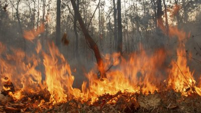 Пожар бушува край Клисура