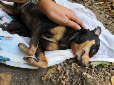 Питбул разкъса малко куче в София
