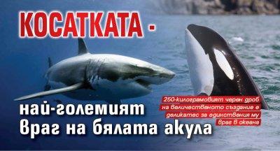 Косатката - най-големият враг на бялата акула