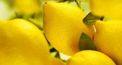 Внимание, вегани! Лимоните невинаги са подходящи за вас